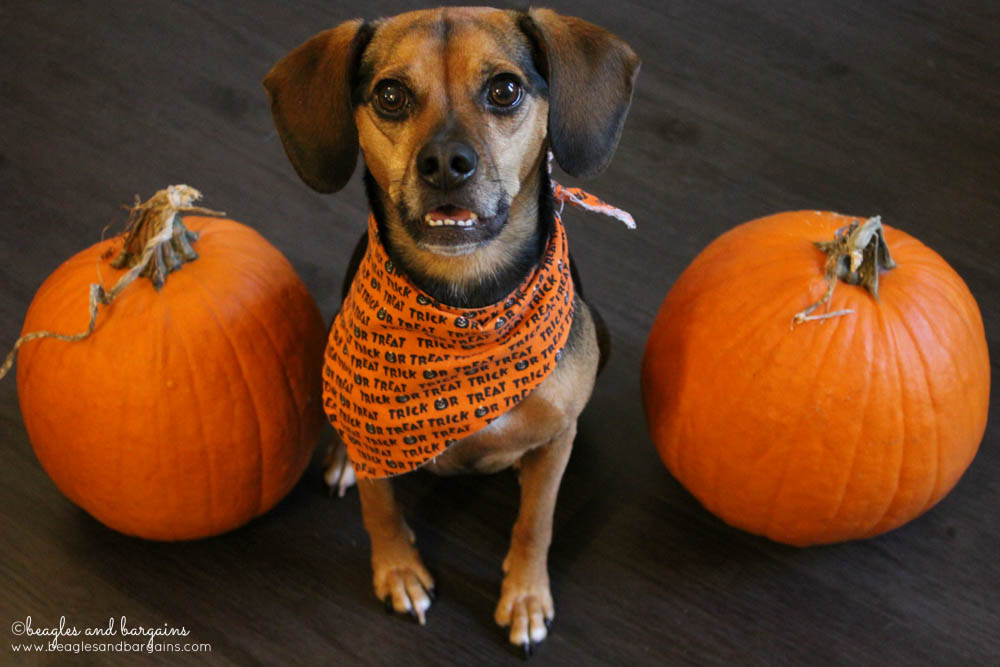 Luna celebrates Halloween with the Trick or Treat Giveaway Hop!