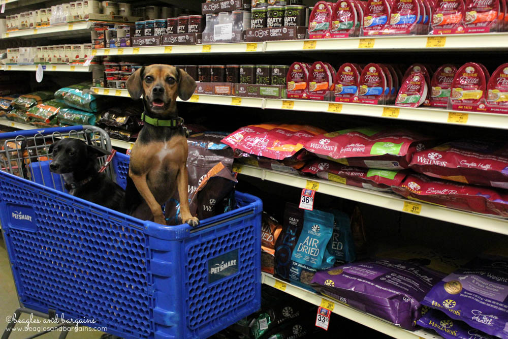 Luna and Ralph go on a shopping spree at PetSmart