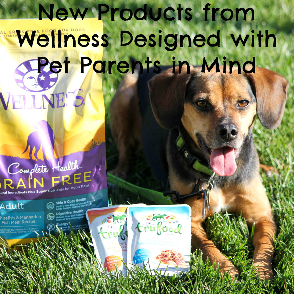 New Products from Wellness Designed with Pet Parents in Mind