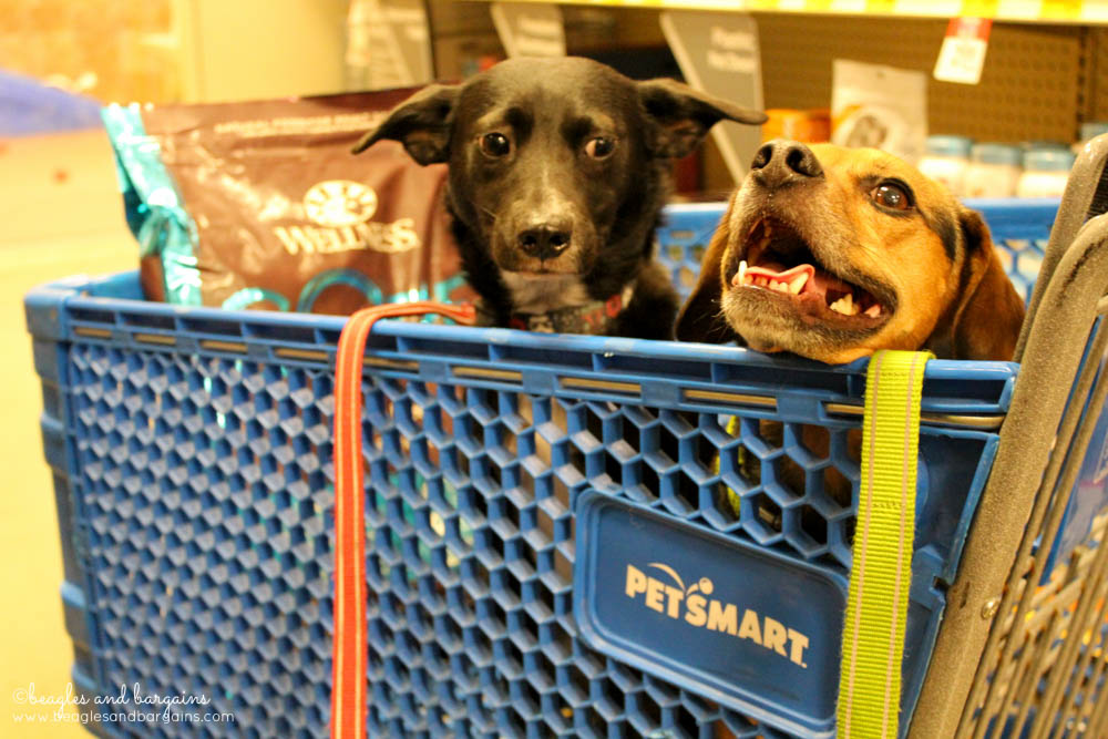 Ralph and Luna go shopping at PetSmart for Wellness CORE