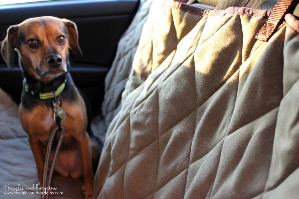 Luna can't wait for our next car trip with our new Solvit Deluxe Hammock Seat Cover