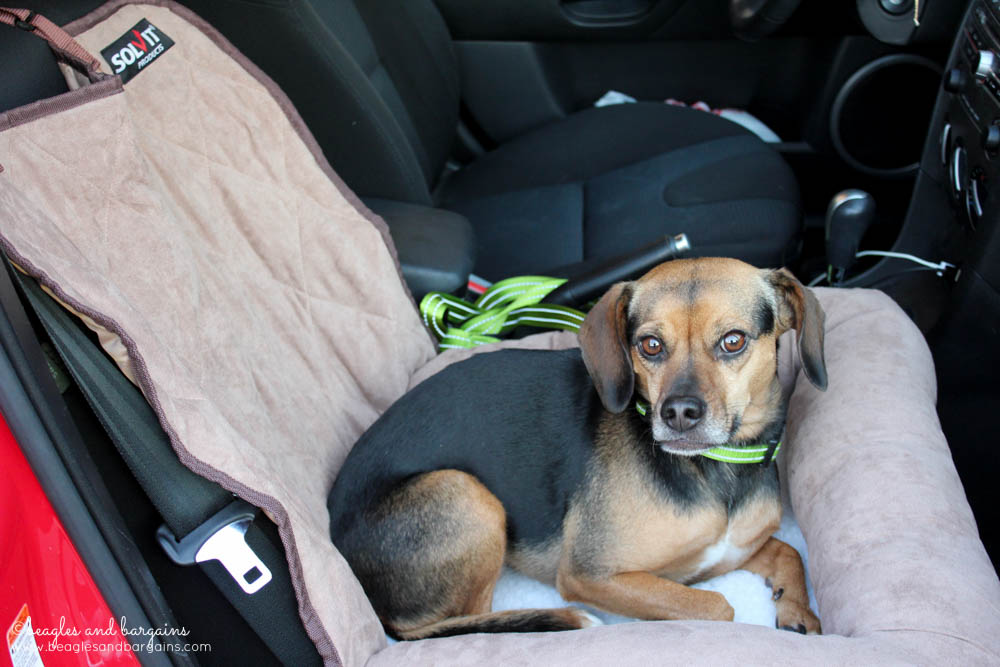 Luna lounges in her Solvit Small Car Cuddler