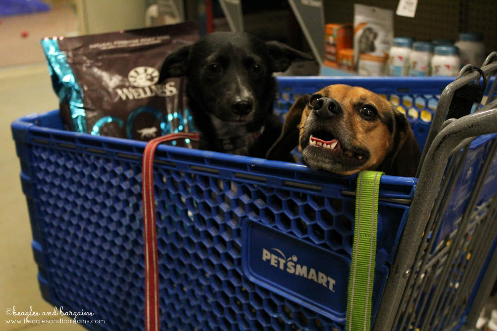 Ralph and Luna go shopping at PetSmart for Wellness Pet Food