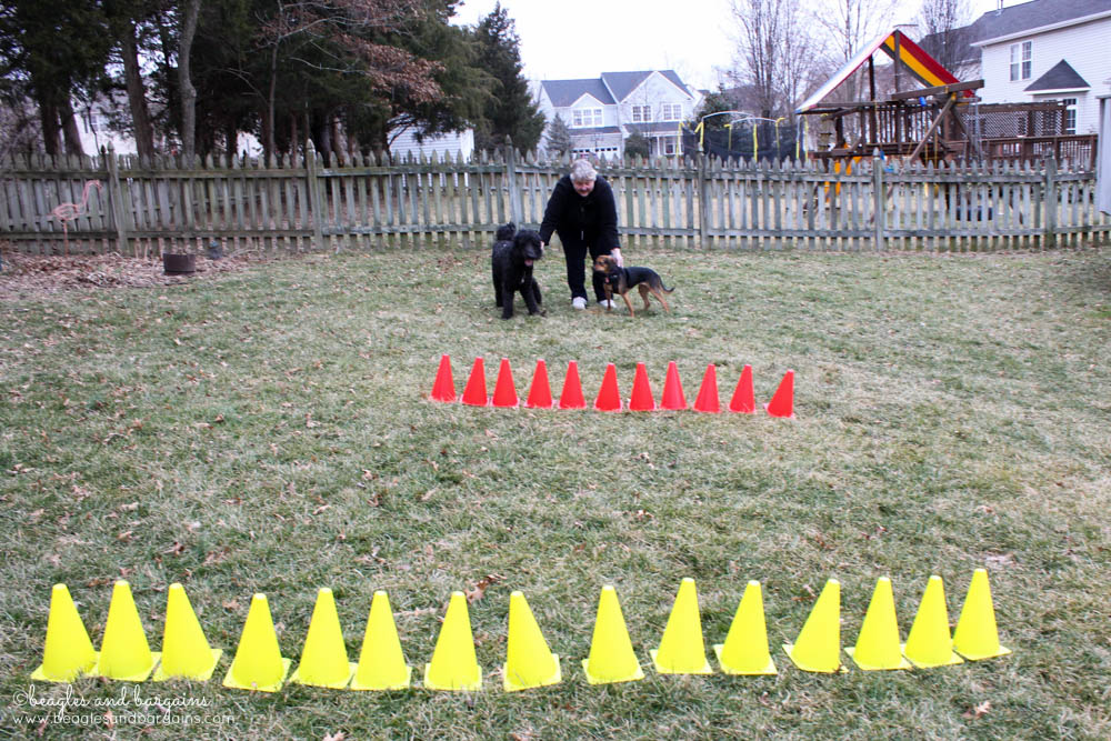 Fun Activities to Do Outside with Your Dog - Play a Game