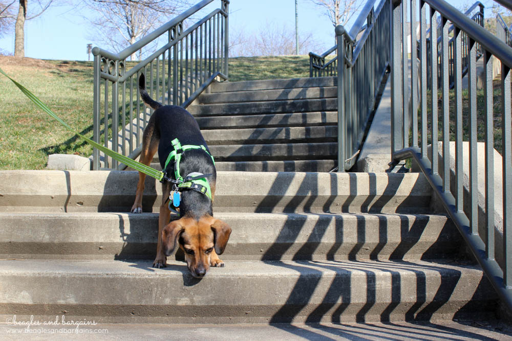 Fun Activities to Do Outside with Your Dog - Practice Nose Work