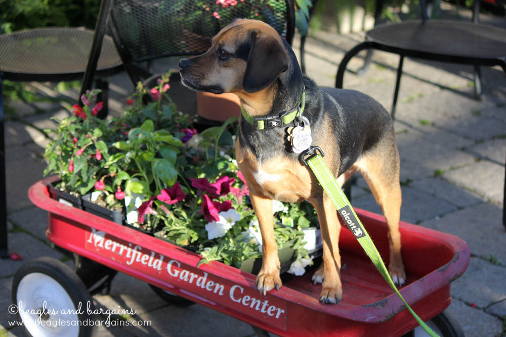 Fun Activities to Do Outside with Your Dog - Plant a Garden