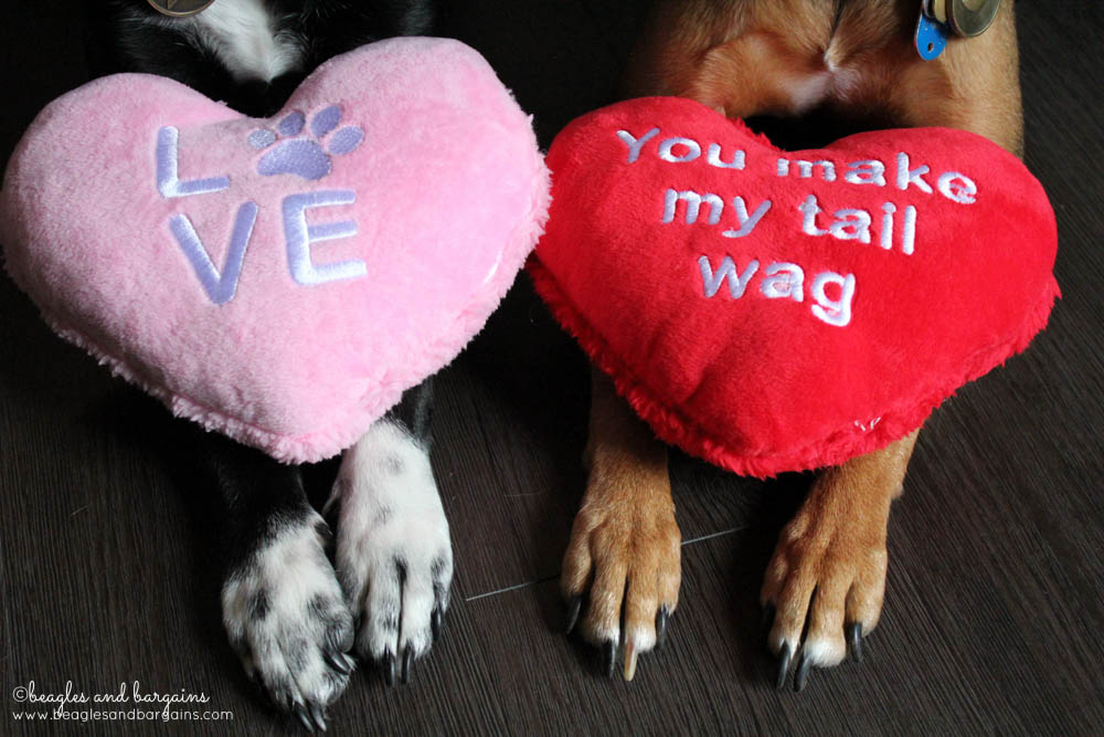 Happy Valentine's Day from Ralph and Luna at Beagles & Bargains!