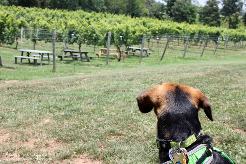 Fun Activities to Do Outside with Your Dog - Enjoy a Dog-Friendly Winery or Brewery