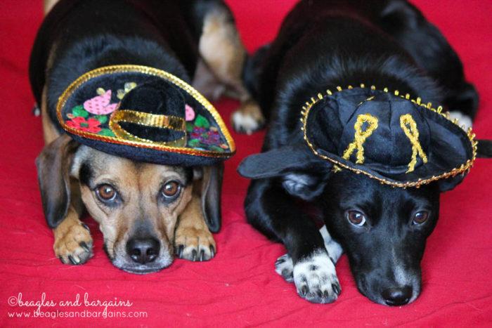Happy 6th Birthday Luna!   Ralph and Luna get into a little mischief