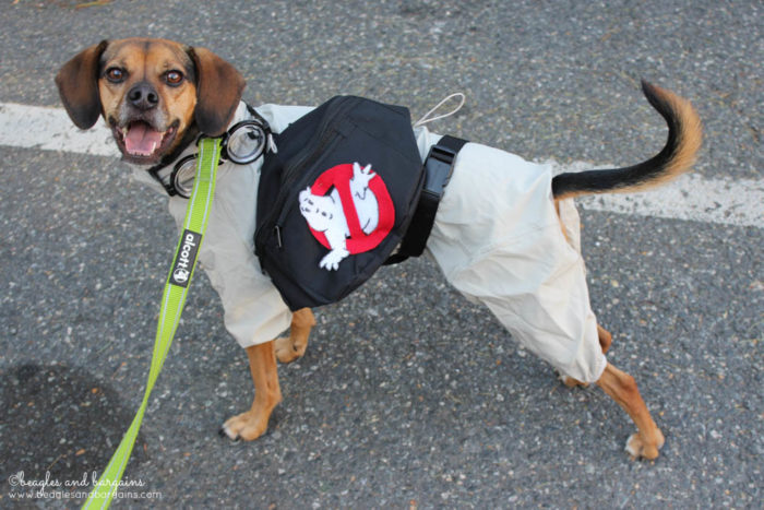 Happy 6th Birthday Luna! | Halloween Dog Costume - Ghostbusters