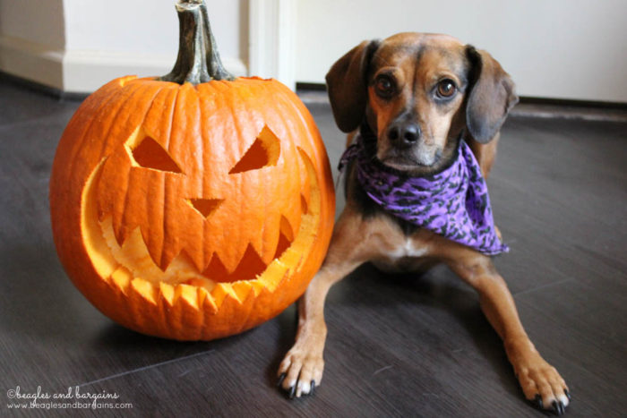 Happy 6th Birthday Luna! | Halloween Jack-o-Lantern
