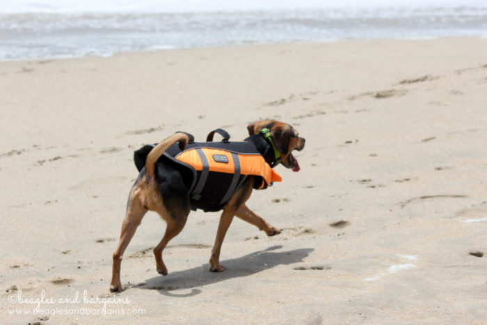 Happy 6th Birthday Luna!   Huntington Dog Beach in California