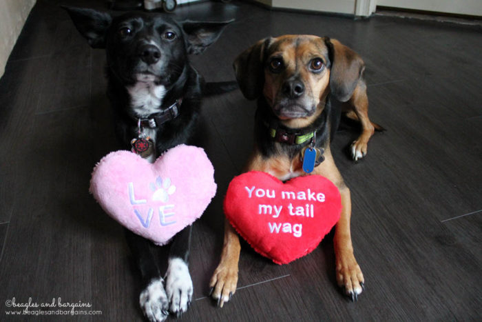 Happy 6th Birthday Luna!   Ralph and Luna are a bonded pair   Dogs