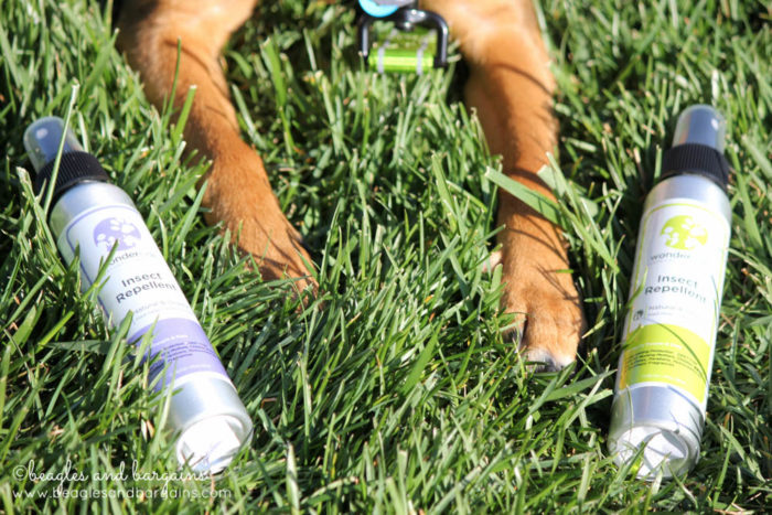 Why I Use Natural Flea and Tick Care on My Dogs | Wondercide