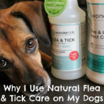 Why I Use Natural Flea and Tick Care on My Dogs