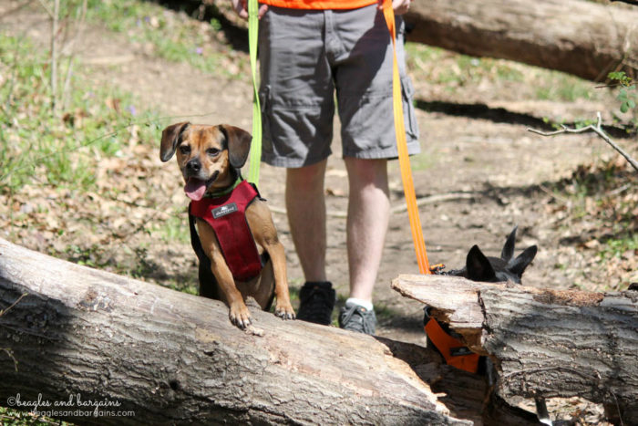 Ralph and Luna During a Dog Friendly Hike at the Blue Ridge Center for Environmental Stewardship