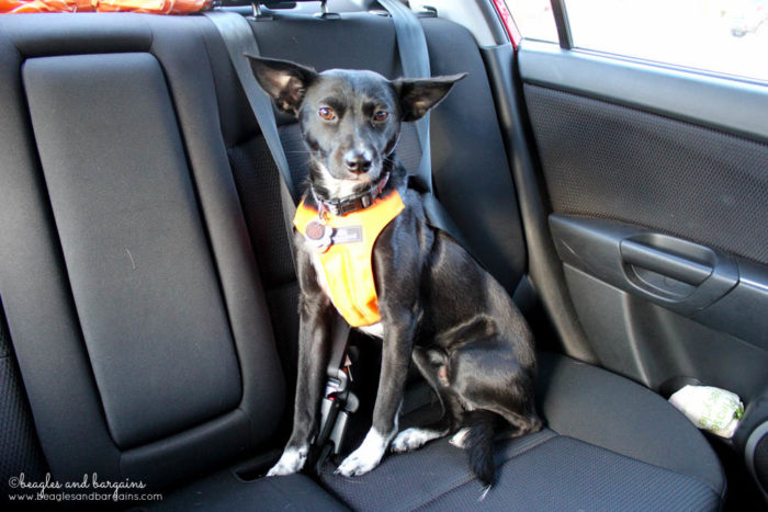 Tips for Planning a Successful Pet Friendly Road Trip - Ultimate Pet Friendly Road Trip Guide