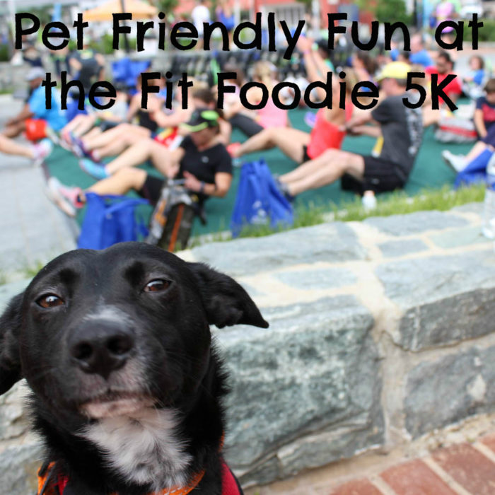Pet Friendly Fun at the Fairfax Fit Foodie 5K & Festival