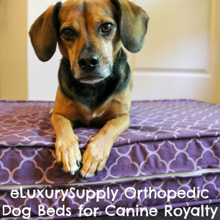 Orthopedic Dog Beds Fit for Canine Royalty From eLuxurySupply