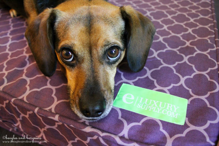 eLuxurySupply makes luxury linens accessible and affordable. Now offering orthopedic dog beds!