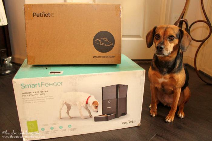 Luna with her Petnet SmartFeeder and Ramp delivery