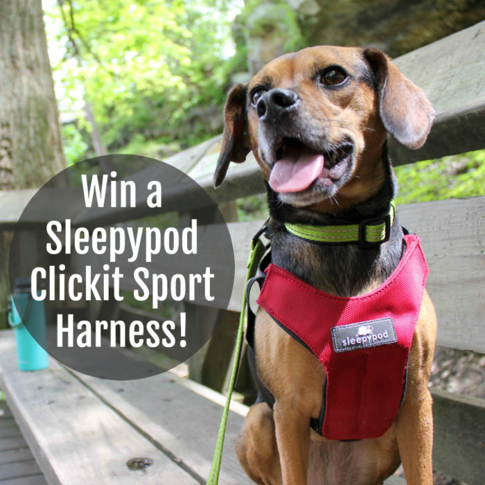 Win a Get Pet Friendly Road Trip Ready with Sleepypod - Win a Clickit Sport Harness!Sleepypod Clickit Sport Harness!