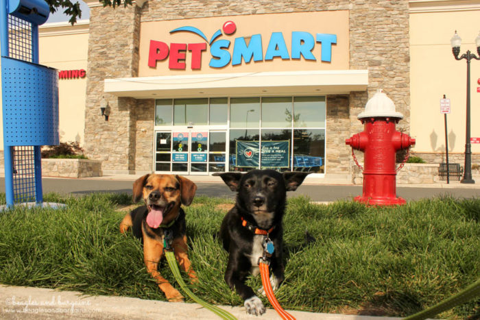 Join the Raw Revolution this Summer with Wellness CORE RawRev for Dogs - Save at PetSmart!