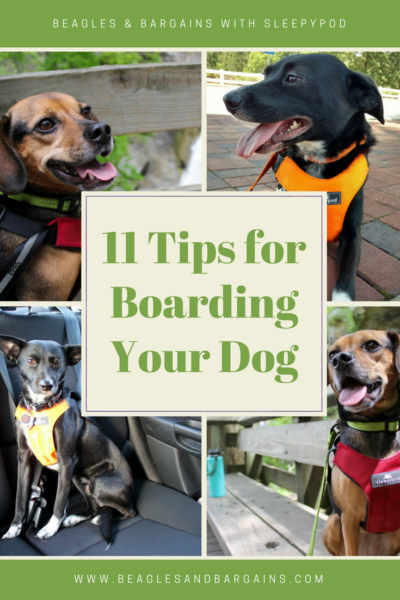 11 Tips for Preparing to Leave Your Pet Behind During a Vacation