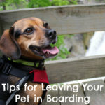 11 Tips for Preparing to Leave Your Pet in Boarding While You're on Vacation