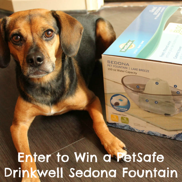 Enter to Win a PetSafe Drinkwell Sedona Fountain #sponsored - Pet Hydration Month
