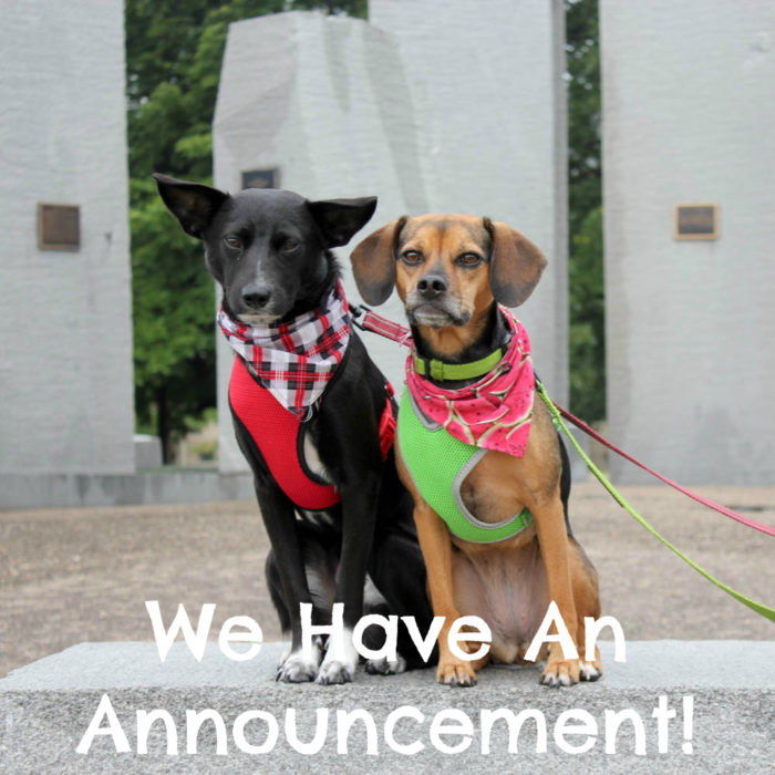 We Have An Announcement! - Ralph & Luna