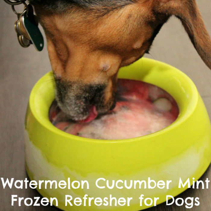 Watermelon Cucumber Mint Frozen Refresher for Dogs Recipe