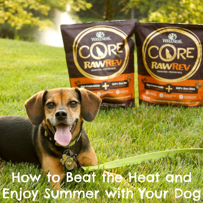 How to Beat the Heat and Enjoy Summer with Your Dog - #sponsored by Wellness CORE RawRev
