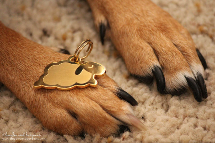 8 Ways to Prepare with Your Pets for Disasters TODAY! - Update ID tag info - Sleepypod Pendants