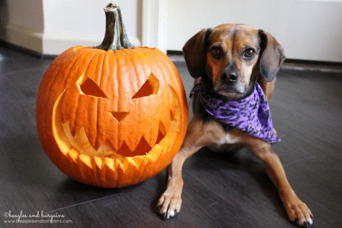 Luna with a Pumpkin