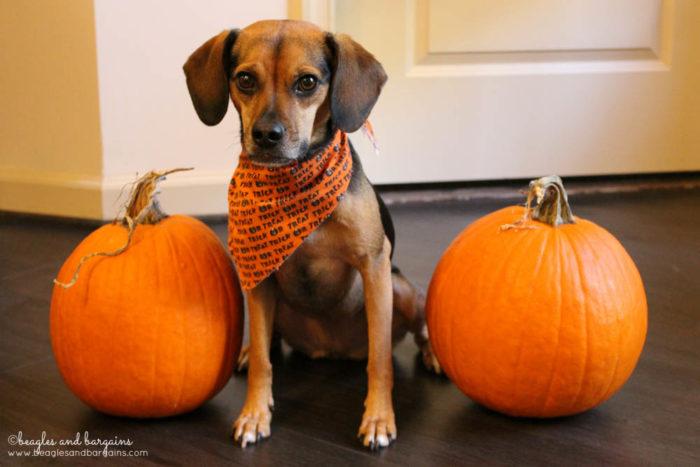 Luna with Pumpkins - Trick or Treat Giveaway Hop