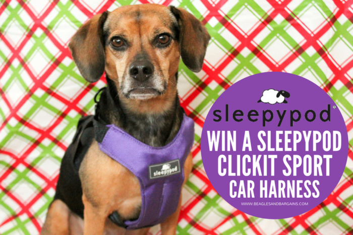 Why I Bring My Dogs Along on Holiday Travel | Stocking Stuffer Giveaways | Win a Sleepypod Clickit Sport Crash Tested Car Harness for Dogs #sponsored by Sleepypod