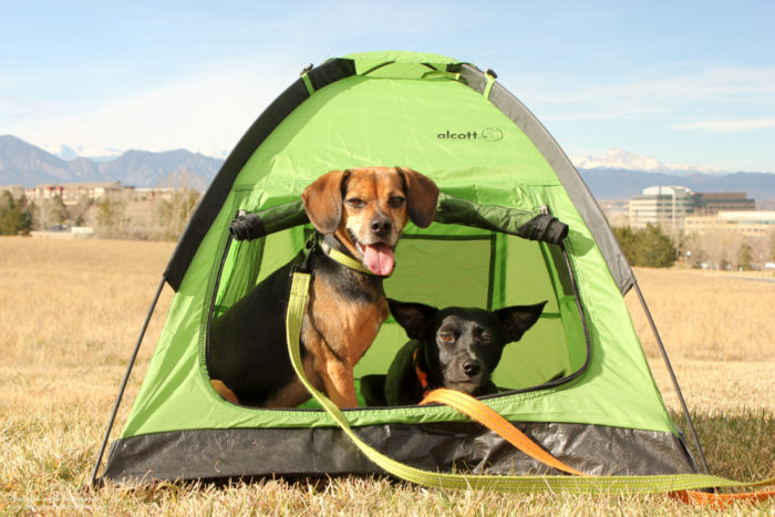 Top 5 C&ing Essentials for Dogs - A Safe Place to Retreat - alcott Pup Tent : dog pup tent - memphite.com