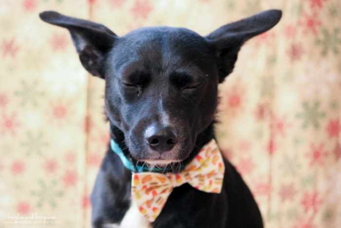 Why Every Dog Needs a Snazzy Bow Tie   Stocking Stuffer Giveaways   #sponsored by Brooklyn Bowtied