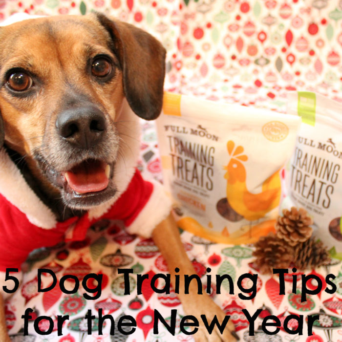 5 Dog Training Tips to Start the New Year off Right | Stocking Stuffer Giveaways | #sponsored by Full Moon