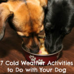 7 Cold Weather Activities to Do with Your Dog {Stocking Stuffer Giveaway – Day #5}
