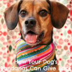 How Your Dog's Bandanas Can Give Back {Stocking Stuffer Giveaway – Day #11}