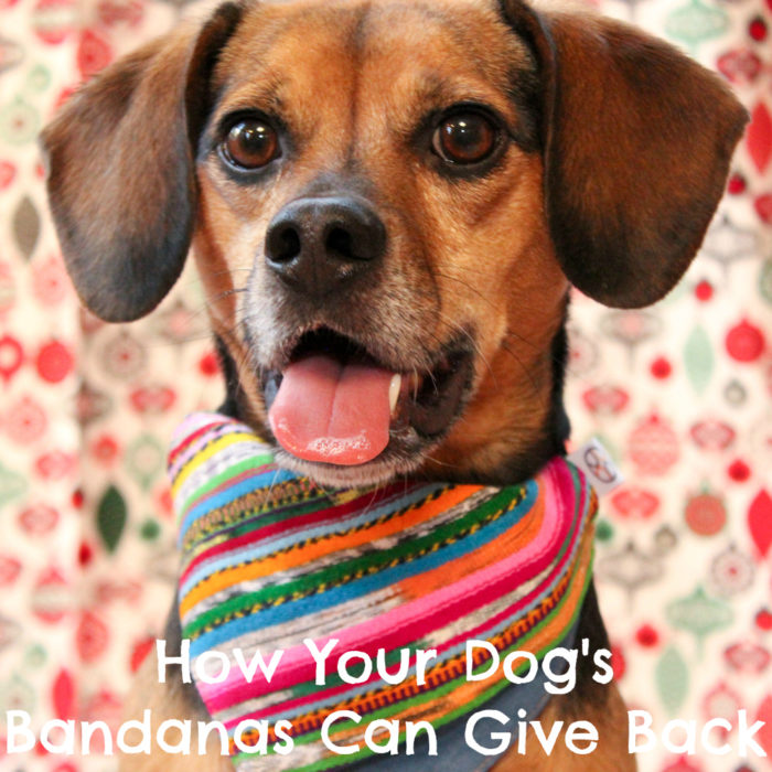 How Your Dog's Bandanas Can Give Back | Stocking Stuffer Giveaways | #sponsored by Jazal Color