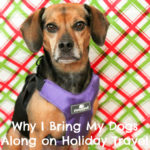 Why I Bring My Dogs Along on Holiday Travel {Stocking Stuffer Giveaway – Day #2}
