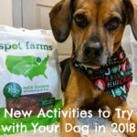 New Activities to Try with Your Dog in 2018 {Stocking Stuffer Giveaway – Day #14}