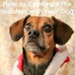 How to Celebrate the Holidays with Your Dog {Stocking Stuffer Giveaway – Day #9}
