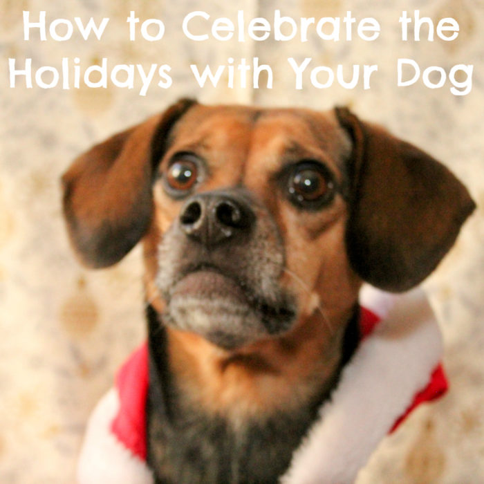 How to Celebrate the Holidays with Your Dog | Stocking Stuffer Giveaways | #sponsored by Wellness