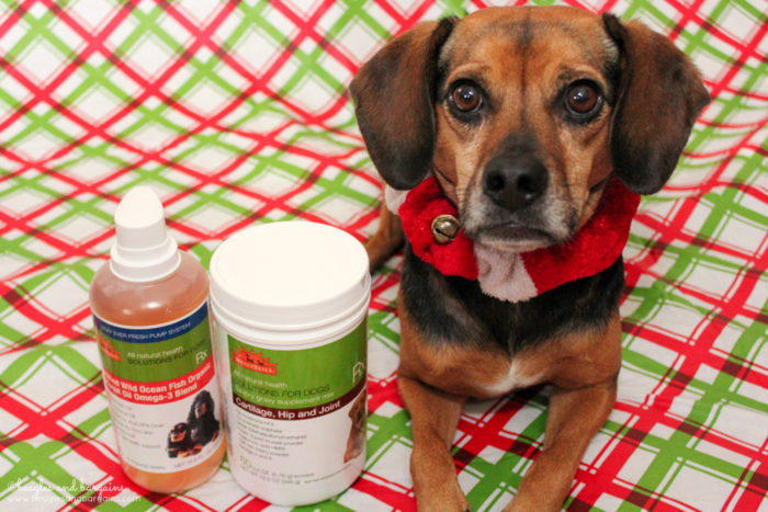 Tips to Prioritize Your Dog's Health in the New Year | Stocking Stuffer Giveaways | #sponsored by WellyTails