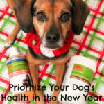 Prioritize Your Dog's Health in the New Year {Stocking Stuffer Giveaway – Day #13}