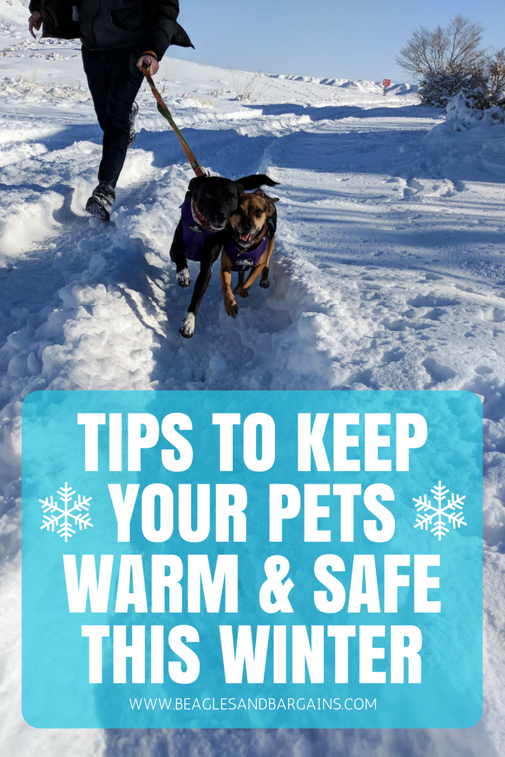 Keep Your Life On Track All Year Long: Tips To Keep Your Pets Warm & Safe This Winter